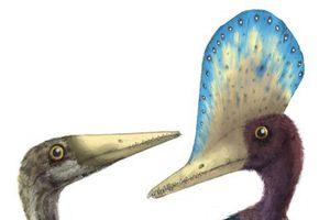 Tìm thấy hóa thạch trứng thằn lằn bay
