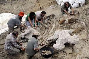 Phát hiện 'ổ' hàng trăm trứng khủng long hóa thạch