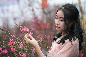 Đào Nhật Tân được mùa, đào rừng khan hiếm ở chợ hoa