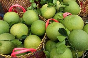 Nghiên cứu khả năng sử dụng màng bao ăn được trong chế biến giảm thiểu sản phẩm từ bưởi da xanh