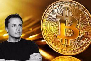 Elon Musk: 'Tôi nên mua Bitcoin từ 8 năm trước'