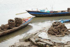 Lạ lùng nghề nuôi hàu 'đầu độc' đầm nước danh thắng Lăng Cô