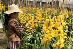 Nhà vườn trồng hoa ở Đà Lạt thấp thỏm trước COVID-19