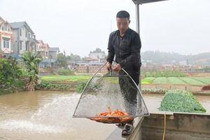 Người dân Thủy Trầm thoát nghèo từ nuôi cá chép đỏ