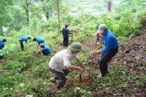 Tăng cường quản lý, bảo vệ và phòng cháy, chữa cháy rừng dịp Tết Nguyên đán