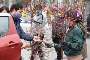 Nhộn nhịp chợ hoa cây cảnh lớn nhất Thủ đô