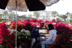 Chợ hoa Tết ở Đà Nẵng vắng người mua