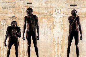 Khám phá bất ngờ về loài người tiền sử mới