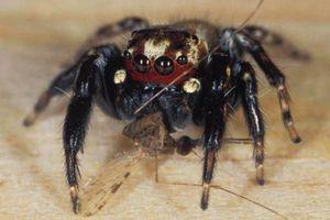 Phát hiện khắc tinh tự nhiên của muỗi hút máu người