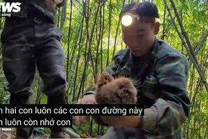 Quay clip săn bắt dúi tự nhiên: Kiểm lâm xác định được địa chỉ nhóm Thợ rừng