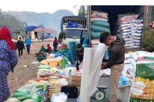 Giống trợ giá bán tự do ở Phú Thọ, nghi xuất phát từ Vĩnh Phúc