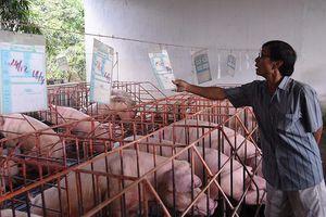 Bảo đảm nguồn cung thịt lợn dịp Tết Nguyên đán