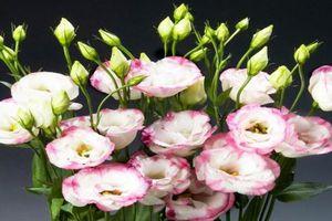 Những loài hoa nên đặt trên ban thờ ngày Tết để thu hút tài lộc