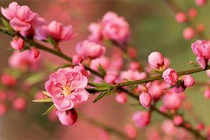 6 loại hoa nên đặt trên bàn thờ ngày Tết để thu hút tài lộc