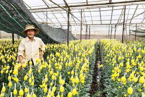 Các thành phố lớn chung tay 'giải cứu', giá hoa Đà Lạt nhích dần lên