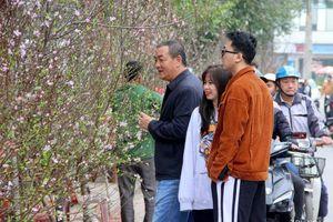 Người dân Nghệ An 'chen chân' mua đào Tết ngày cuối tuần