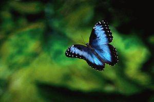 Ảnh đẹp về cuộc sống trong rừng mưa nhiệt đới