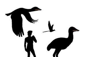Hóa thạch loài 'phượng hoàng' cổ đại