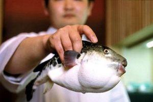 Nhận biết cá nóc độc hại, nguy hiểm chết người