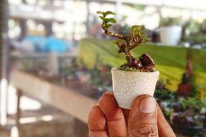 Chiêm ngưỡng bộ sưu tập kỷ lục thế giới 5.600 cây bonsai và tiểu cảnh mini