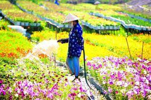 Thời tiết thuận lợi trong dịp Tết Tân Sửu