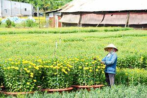 Giữ danh nghề trồng hoa Gò Vấp