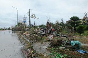 Mưa cả ngày, lái buôn vứt quất, đào đầy đường
