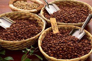 Giá cà phê hôm nay quay đầu giảm
