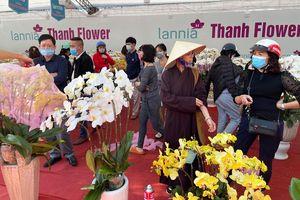 Hà Nội: Nhộn nhịp chợ hoa, cây cảnh chiều 29 Tết