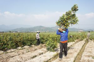 Quảng Ninh hỗ trợ nông dân tiêu thụ nông sản