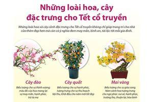 Inforaphics: Những loài hoa, cây đặc trưng cho Tết cổ truyền