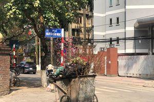 Xót cảnh xác đào bị vứt la liệt ở ven đường ngày 30 Tết