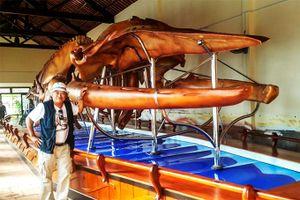 Chuyện phục dựng xương cá voi