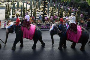 52 cặp đôi ở Thái Lan kết hôn trên lưng voi