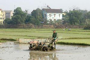 Các địa phương tập trung sản xuất vụ đông xuân