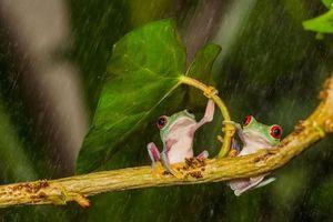 'Lác mắt' với những màn trú mưa siêu đáng yêu của động vật