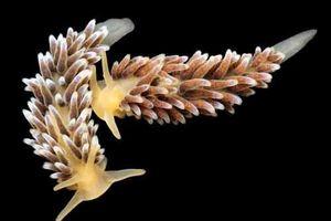 Những sinh vật đẹp lạ kỳ dưới biển sâu