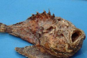 Top 10 loài sinh vật kỳ quái ẩn náu dưới biển sâu