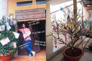 Trào lưu 'hot' của teen Việt trong những ngày Tết: Khoe cây cảnh treo đầy bằng khen, huy chương
