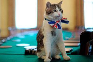 Con mèo 'quyền lực' ở dinh thủ tướng Anh