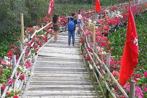 Thỏa sức 'check in' chiếc cầu tre dài nhất Việt Nam giữa rừng tràm