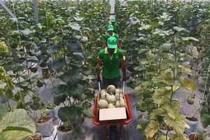 Phấn đấu giá trị sản xuất nông nghiệp đạt 630-650 triệu đồng/ha