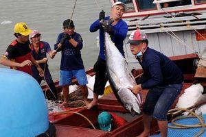 Kỳ vọng chuyến biển đầu năm, của ngư dân Nam Trung Bộ