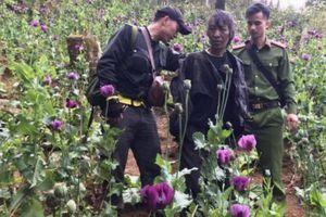 Bắt cặp đôi trồng gần 900 cây thuốc phiện ở rừng đầu nguồn Lai Châu