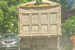 Phạt tiền tỷ, xe quá tải vẫn 'nhờn luật'