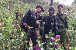 2 đối tượng lén lút trồng 888 cây thuốc phiện ở gần rừng đầu nguồn