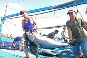 Khánh Hòa: Sôi động tàu cá ra, vào cảng những ngày đầu năm
