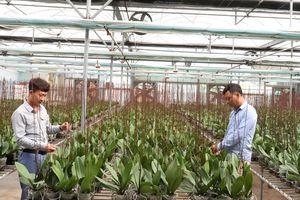 Ðẩy mạnh phát triển nông nghiệp công nghệ cao