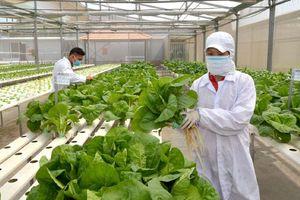 Thành phố Hồ Chí Minh: Phấn đấu là trung tâm khởi nghiệp lớn