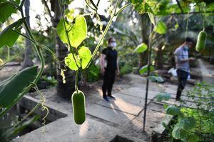 Vườn cây của nguyên Phó thủ tướng Trương Vĩnh Trọng